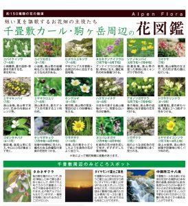 駒ヶ根岳 高山植物
